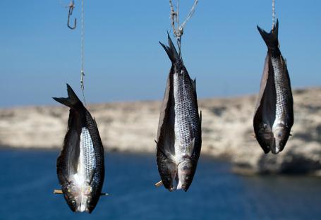 Разрешат ли рыбакам-любителям продавать улов?