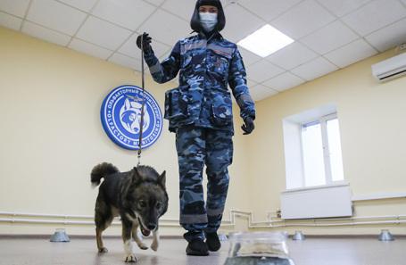 Тренировка собак для поиска зараженных коронавирусом.