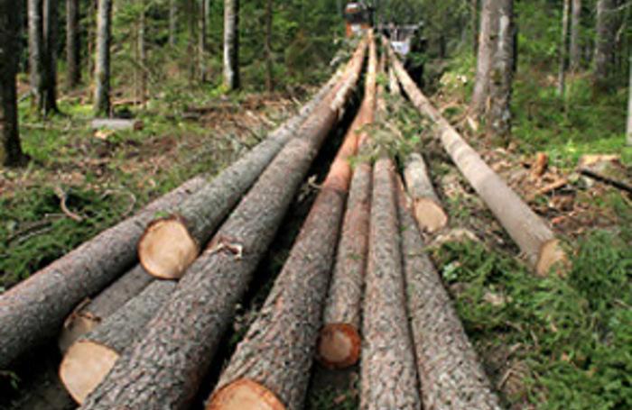 выписать лес для строительства дома в петропавловске-камчатском день прошел тихо