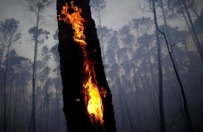 Лесной пожар в Бразилиа, Бразилия.