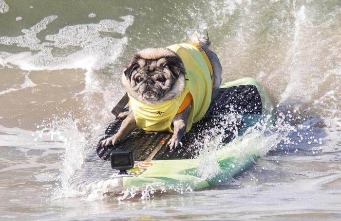 Дог-серфинг