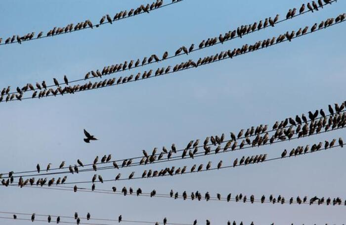 Птицы на косе Чушка в Краснодарском крае.