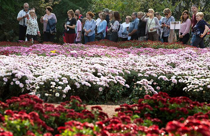 Посетители «Бала хризантем» в Никитском ботаническом саду Ялты.