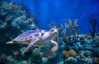 До самого дна. Открытие уникального океанариума (Фото)
