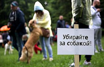 Уберите за собакой. Когда в России введут штрафы, и насколько сознательны владельцы в Европе?