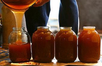Пасечник Юрий Лужков: «Меда может не хватить даже на зимнее хранение пчел»