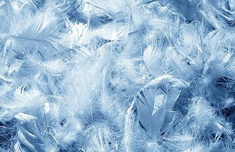 Шведские ученые предложили есть птичьи перья