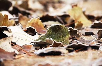 Неожиданная проблема автомобилистов: этой осенью опавших листьев больше, чем обычно