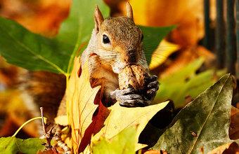 Осень. Волшебная пора. Фотоистории на BFM.ru