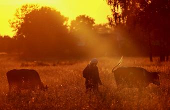 Волгоградскую область перевели на час вперед. Отчасти виноваты коровы