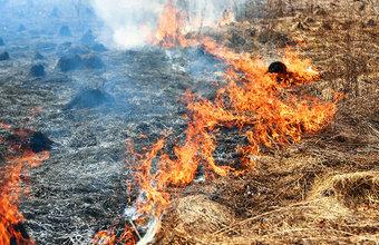 В Забайкалье из-за степных пожаров введен режим ЧС