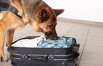 Нужны ли аэропортам собаки, медпункты и запас еды на случай войны?