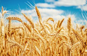 На Украине могут разрешить продажу сельхозземель