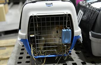 «Это живое существо». Стоит ли менять правила перевозки домашних животных?