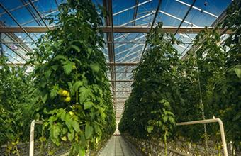 Агрокомплекс имени Ткачева расширился и занял третье место в рейтинге владельцев сельхозземель в России