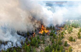 Лесные пожары в ХМАО