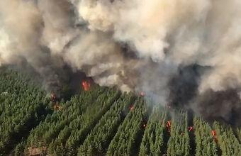 Пожары в Ростовской области: один человек погиб, десятки пострадали