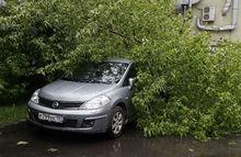 Стихия против машин: с кого взыскивать компенсацию за ущерб от урагана