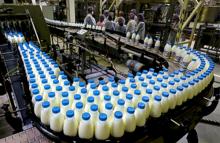 Белорусское молоко может вынужденно сбежать из России