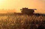 Россия потеснила США на мировом рынке зерна