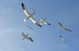Птицы и самолеты. Кто в небе хозяин?
