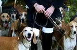 Собаки на охоте в лесу Шантийи к северу от Парижа, Франция.