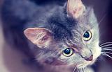 Китайские химики заплатили миллиард за симулятор домашнего кота