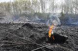 Пожары в России: очевидцы не увидели достаточного количества спасательной техники