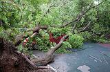 Пострадавшие автовладельцы: стоит ли судиться из-за упавших деревьев?