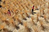 Рабочие сушат бамбуковые палочки в деревне в округе Синан, провинция Цзянси, Китай.
