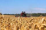 Чем плох рекордный урожай зерновых?