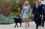 Неприличный поступок пса французского президента рассмешил министров