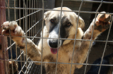 «Мы создали список живодеров — бойся». База тех, кто жестоко обращается с животными, появилась в России