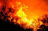 Дикий огонь накинулся на Калифорнию