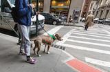В Нью-Йорке можно «припарковать» собаку