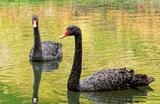Самые «черные лебеди». Список наихудших сценариев на 10 лет по версии Bloomberg