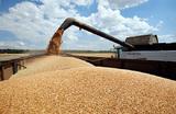 Выйти в мировые лидеры по экспорту зерна России помогла девальвация рубля?