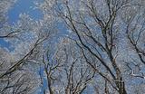 Деревья, покрытые снегом, на окраине Санкт-Петербурга.