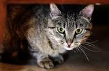 В Москве возбуждено уголовное дело против зоозащитника, спасавшего кошек