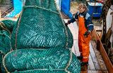 Требования ФСБ подстегнут цены на рыбу?