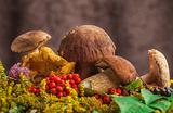 Куплю грибы и ягоды. Государство