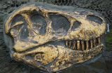 В Аргентине открыли новый гигантский вид динозавров