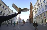 Назван российский город-миллионник с самыми чистыми дворами и улицами