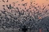 Чайки над лодкой на реке Джамна в Индии.