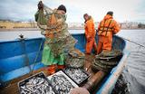 Квоты или аукционы: российские рыбаки вновь выступили против возможных новых правил игры