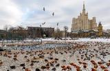 Утки у пруда в Московском зоопарке. В феврале ему исполнилось 155 лет.