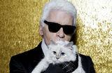 Без сапог, но с горничными и наследством: сколько денег у кошки Лагерфельда?