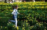 Тюльпаны в Сент-Джеймсском парке в Лондоне.