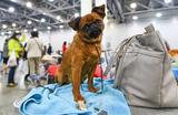 Интернациональная выставка собак всех пород «Евразия 2019» в «Крокус Экспо». Москва.