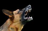 МВД сократило перечень потенциально опасных пород собак